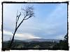 Distant Horizon, East Bay Hills