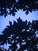 Leafy Silhouette