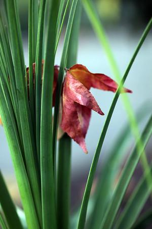 Nested Leaf