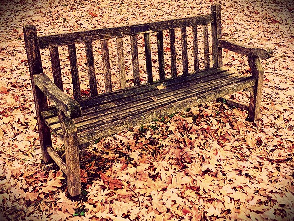 Camouflaged Bench