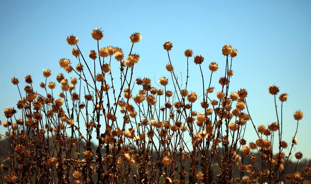 California Natural Landsaping