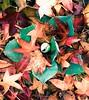 A Blanket of Leaves