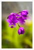 """Orchids (Pic 258 2nd year - 03 Oct 2009)<br /> <br /> Thank you all for your comments on yesterday's shot of the Orchid with the vignette. This is the original shot with the DOF kept shallow at f3.5 on Tamron's 90mm macro. The vignette was used to reduce the intensity of the greens at the bottom. <br /> <br /> Shot in the terrace garden of the place where we were staying in Bengaluru (Bangalore) early this month.<br /> <br /> more pictures at Bengaluru gallery <br /> <br />  <a href=""""http://hershy.smugmug.com/Travel/Bengaluru-Bangalore/9662410_xWbG8/1/659473319_MMhqW"""">http://hershy.smugmug.com/Travel/Bengaluru-Bangalore/9662410_xWbG8/1/659473319_MMhqW</a><br /> <br />  <a href=""""http://www.javeri.net"""">http://www.javeri.net</a>"""