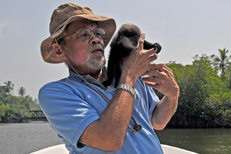 "Monkey<br /> 09 May 2010<br /> Best seen in large size.<br /> During a backwater ride on Madu river in Sri Lanka we came across a local boatmen with this little fellow! We stopped and he passed him to me... was quite a handful!  <br /> <br /> Don't know which species he belongs to, does anyone know? <br /> <br />  <a href=""http://www.javeri.net"">http://www.javeri.net</a>"