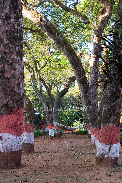 """Hammock (Pic 203 2nd year)<br /> <br /> The hammock in the garden of Mahabaleshwar Club where we stayed was the perfect place to relax with a book.  The shot was a bit difficult as there was strong sunlight  on the top of the trees.  <br /> <br />  <a href=""""http://www.javeri.net"""">http://www.javeri.net</a>"""