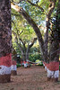 "Hammock (Pic 203 2nd year)<br /> <br /> The hammock in the garden of Mahabaleshwar Club where we stayed was the perfect place to relax with a book.  The shot was a bit difficult as there was strong sunlight  on the top of the trees.  <br /> <br />  <a href=""http://www.javeri.net"">http://www.javeri.net</a>"