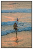 """251 - Jan 29<br /> Fisherman at sunset <br /> <br /> D300 70-200mm ISO 200 f9 1/80<br /> <br /> This fisherman caught one just as I shot this and was checking the exposure... :( <br /> <br /> more pics:<br /> <br />  <a href=""""http://hershy.smugmug.com/gallery/7035963_RG9it/1/456783652_BHMxG"""">http://hershy.smugmug.com/gallery/7035963_RG9it/1/456783652_BHMxG</a><br /> <br /> more info:<br /> <br />  <a href=""""http://www.thefortress.lk/index.html"""">http://www.thefortress.lk/index.html</a><br /> <br /> <br />  <a href=""""http://www.javeri.net"""">http://www.javeri.net</a>"""