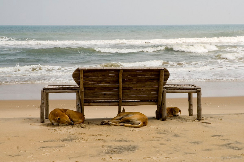 """Paradise Beach<br /> Pondicherry, India<br /> <br /> ADDED IN RESPONSE TO COMMENTS: <br /> These are stray dogs and not wild as they grow up amongst people. A few of them could be 'ferocious' but most co-exist very peacefully with street people. <br /> Majority of the stray dogs in India adapt to their neighbourhood very easily, in most cases thanks to the friendly people in the locality. While there is a system in place to keep a check on strays, often their extended families (read people) jump to the defense of their friendly, harmless four legged pals.<br /> <br /> more pics:  <a href=""""http://Hershy.smugmug.com/gallery/3951305_mw7Dp/1/289184725_zpLUc"""">http://Hershy.smugmug.com/gallery/3951305_mw7Dp/1/289184725_zpLUc</a><br /> <br /> travel and other info on Pondicherry  <a href=""""http://tourism.pondicherry.gov.in/"""">http://tourism.pondicherry.gov.in/</a>"""