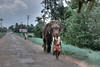 "347<br /> Karala road <br /> D300 ISO 400 f8 1/240 18-105 lens<br /> <br /> During my Kerala trip I saw this elephant walking on a by-road and shot it through the windshield - and no I was not driving! :)  <br /> <br />  <a href=""http://www.javeri.net"">http://www.javeri.net</a>"