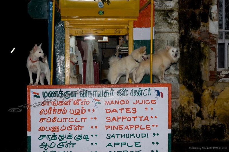 "A shop near our hotel Le Dupleix, Pondicherry, India<br /> It WASN'T a pet shop but as the sign says, they sold different juices! :-) <br /> <br /> more pics:  <a href=""http://Hershy.smugmug.com/gallery/3951305_mw7Dp/1/289184725_zpLUc"">http://Hershy.smugmug.com/gallery/3951305_mw7Dp/1/289184725_zpLUc</a><br /> <br /> travel and other info on Pondicherry  <a href=""http://tourism.pondicherry.gov.in/"">http://tourism.pondicherry.gov.in/</a>"