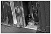 """3rd year Pic 194 - Mar 31 2011<br /> In his own world<br /> Auckland downtown<br /> <br /> This was shot from the hip, as it was a bit of risky area with quite a few derelicts hanging around. <br /> The colour version is here, different crop too. Which is your choice?<br /> <br /> <a href=""""http://hershy.smugmug.com/Travel/New-Zealand-Macau-Hong-Kong/Auckland/15037553_4kFyj#1228810683_5UwTk"""">http://hershy.smugmug.com/Travel/New-Zealand-Macau-Hong-Kong/Auckland/15037553_4kFyj#1228810683_5UwTk</a>"""