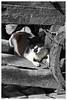 "3rd year Pic 046 - Sep 08 2010<br /> Cat nap, Dhobi Ghat<br /> <br /> Original colour version:   <br /> <a href=""http://hershy.smugmug.com/Photography/Mumbai-my-city/Dhobi-ghat-cuffe-Parade/10119943_4urML#984112098_vjmei-A-LB"">http://hershy.smugmug.com/Photography/Mumbai-my-city/Dhobi-ghat-cuffe-Parade/10119943_4urML#984112098_vjmei-A-LB</a>"