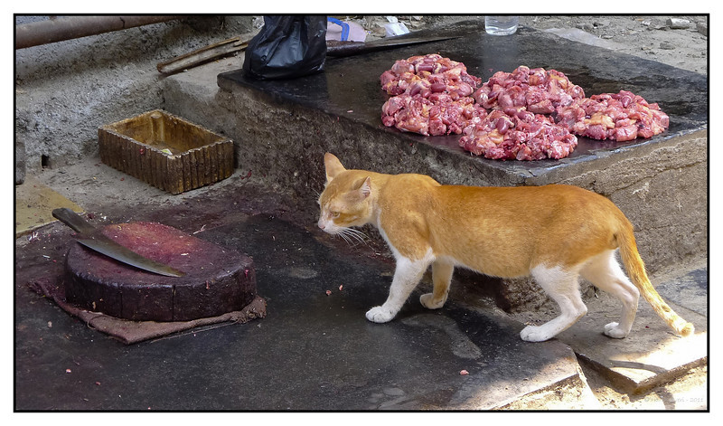 """3rd year Pic 236 - May 24 2011 <span style=""""color:yellow"""">Cat meat </span>  Jyotiba Phule Mkt. (Crawford Mkt.)  13th May <span style=""""color:red"""">This shot was accepted in Leica Forum's D-Lux Master category. </span><br> http://gallery.lfi-online.de/gallery/thumbnails.php?album=lastup&cat=-2776<br> http://gallery.lfi-online.de/gallery/displayimage.php?pid=151698&categorized"""