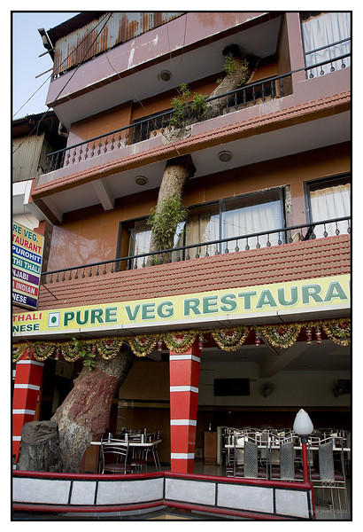3rd year Pic 175 - Mar 04 2011<br /> Eco-friendly?<br /> Mahabaleshwar Market<br /> <br /> I was surprised to see this hotel / restaurant! Maybe they were not allowed to cut the tree and so built the place around it!  :)<br /> <br /> Thank you all for voting yesterday's picture to #1, it was a very pleasant surprise in the morning!