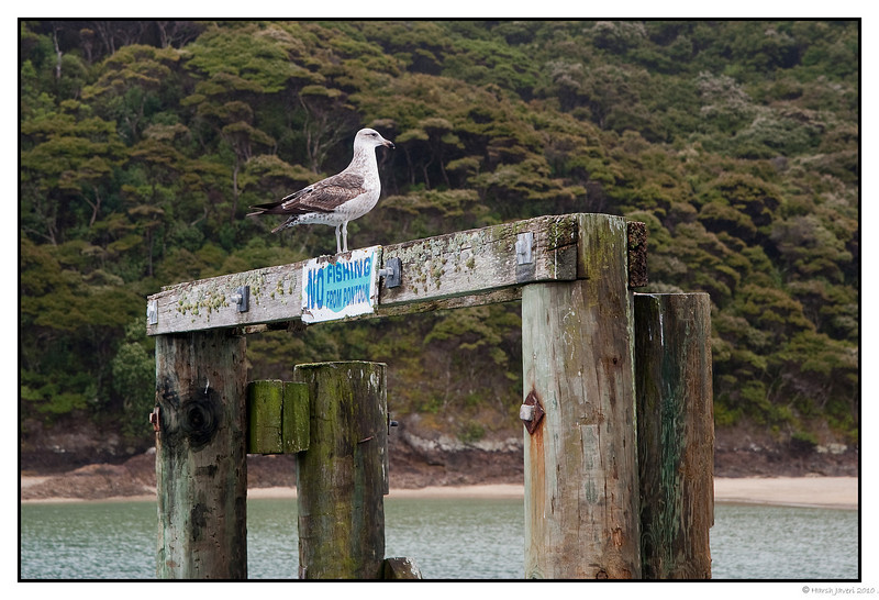 3rd year Pic 141 - Jan 23 2011<br /> No fishing!<br /> Motuarohia island, Bay of Islands. New Zealand