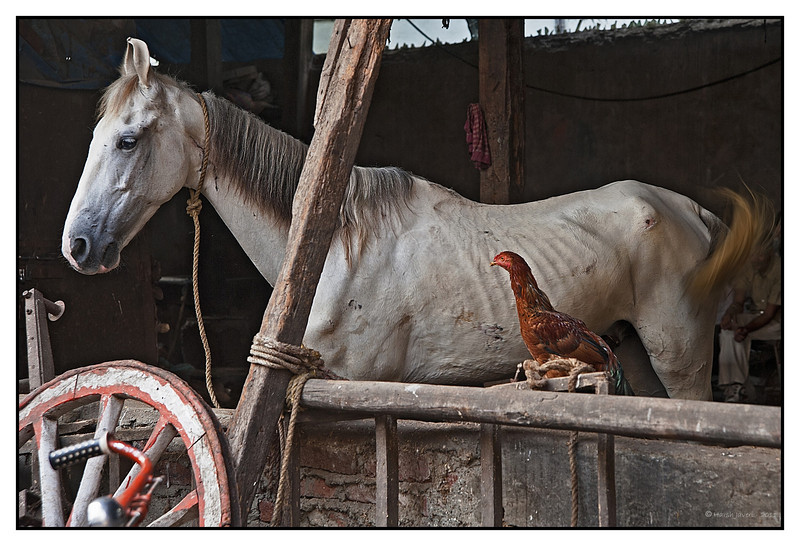 3rd year Pic 124 - Jan 06 2011<br /> Friends. <br /> Stables near Kamathipura, Mumbai