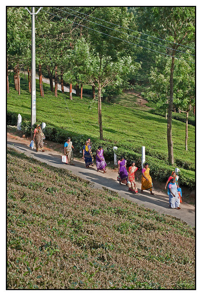 "3rd year Pic 340 - Sep 22 2011 <span style=""color:yellow"">Home after work </span> Club Mahindra, Munnar   Workers in tea estates going back home.   <span style=""color:red"">Added after a few comments</span>  Our cottage was at a little height with a steep slope  (in foreground) leading to the road. I liked the angle and the contrast of brown-green slope and the lush tea plants after the road. The ladies are wearing the traditional Indian dress - Saree / Sari.    http://en.wikipedia.org/wiki/Saree   Munnar gallery: http://hershy.smugmug.com/Travel/Kerala/Munnar/16323712_V6ZsPJ#1275747880_qHFrdt9"