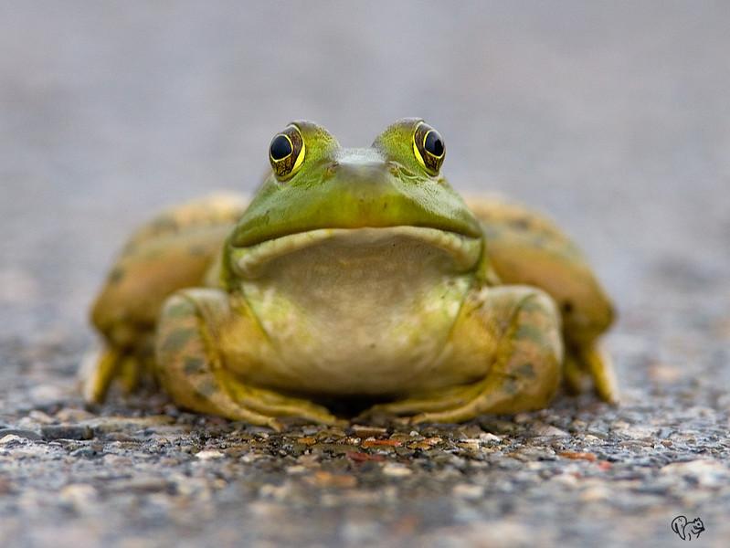 June 3rd<br /> <br /> Frog