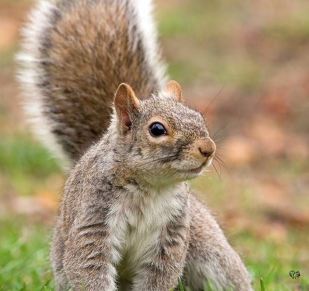 """March 27th<br />  <br /> Its Tuesday...<br /> <br /> Got Nuts?<br /> <br /> Bunch a new sq shots up below<br /> <br /> <a href=""""http://thusie.smugmug.com/gallery/2300686#139022849"""">http://thusie.smugmug.com/gallery/2300686#139022849</a><br /> <br /> George Grebes are done not up yet."""