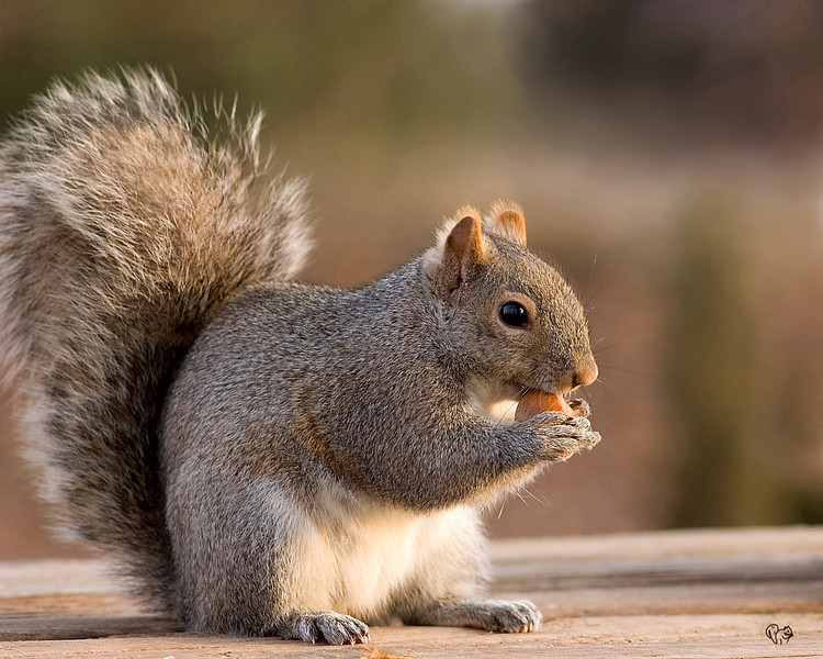 Feb 25th<br /> <br />  Squirrel time. I can only branch out so much ya know:-)