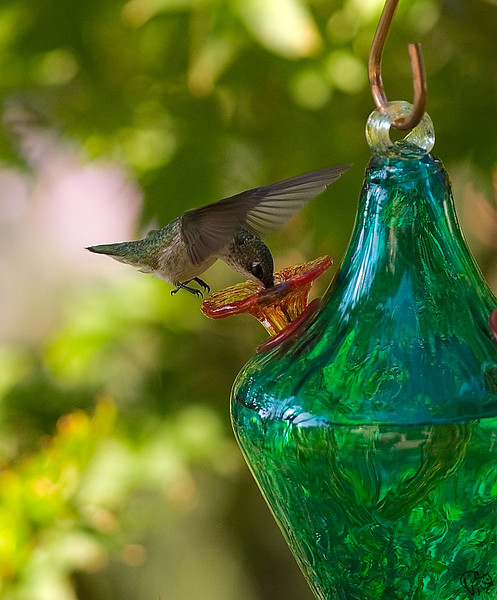 Sept 11th<br /> <br /> Don't normally like feeder shots, tis a nice feeder tho'