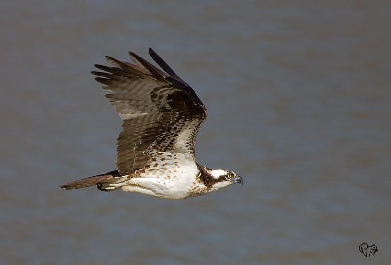 April 4th<br /> <br /> Osprey