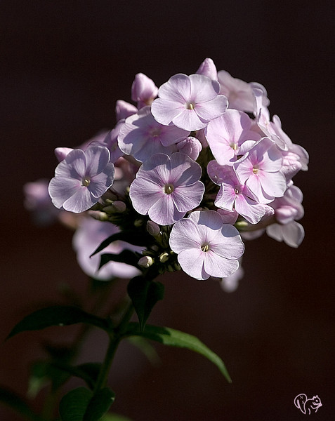 July 27th<br /> <br /> MORE flowers<br /> <br /> Geez just noticed I must be in a pink phase