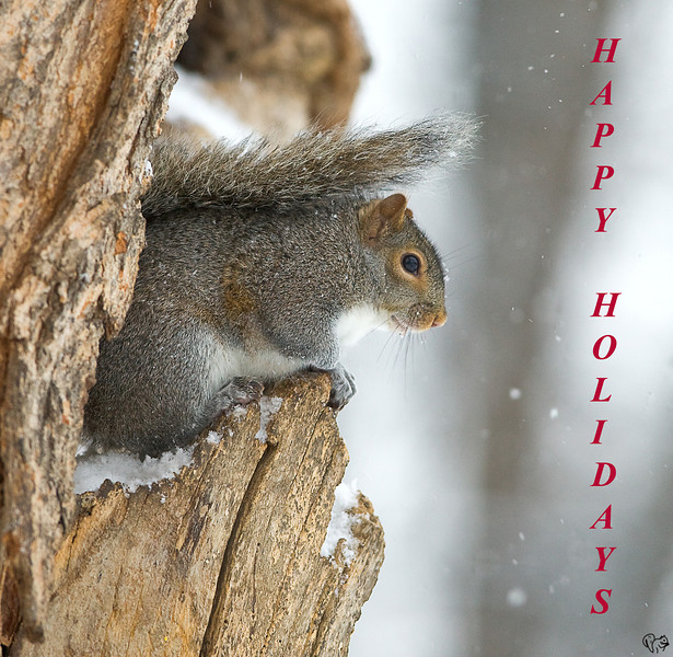 Dec 22nd<br /> <br /> <br /> Have a safe happy holiday season and a super 2008!<br /> <br /> Happy shooting!