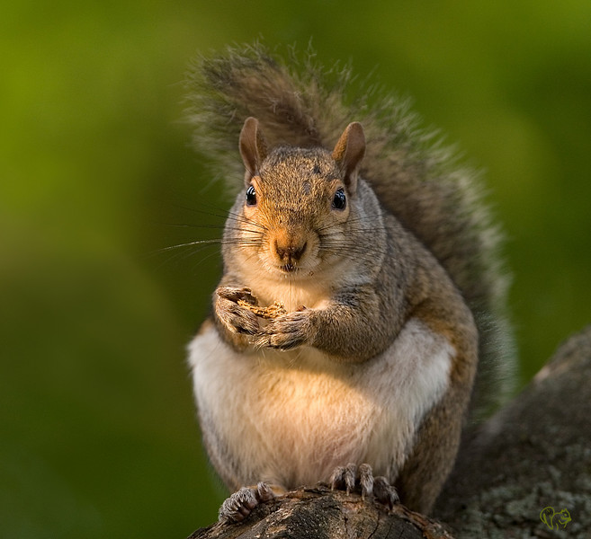 June 18th<br /> <br /> Morning Squirrel