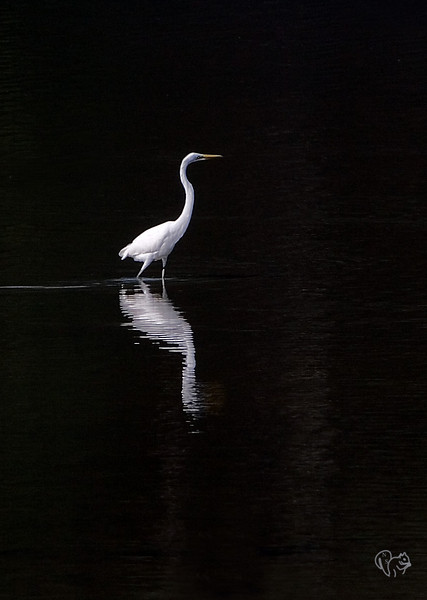 Aug 14th<br /> <br /> Egret