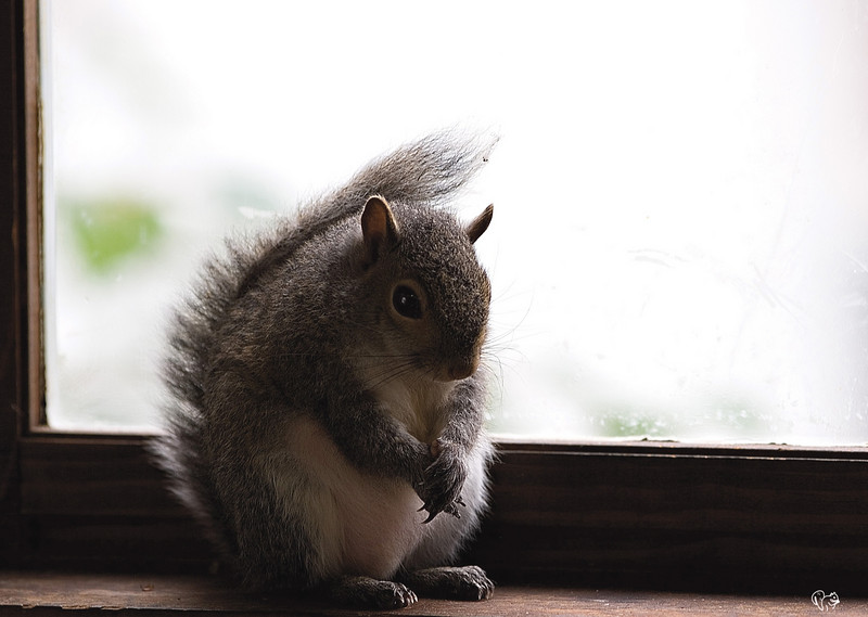 May 6th<br /> <br /> Gently on Ginger, gently on.<br /> <br /> The squirrels from the Secret Garden bid their friend farewell.