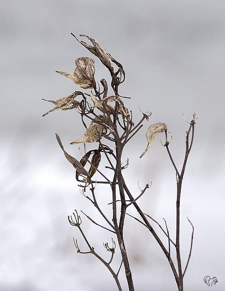Feb 22nd<br /> <br /> Some plants have good bones.
