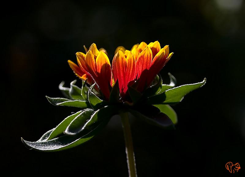 Sept 5th<br /> <br /> Flower