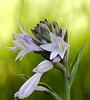 July 13th<br /> <br />  Flower