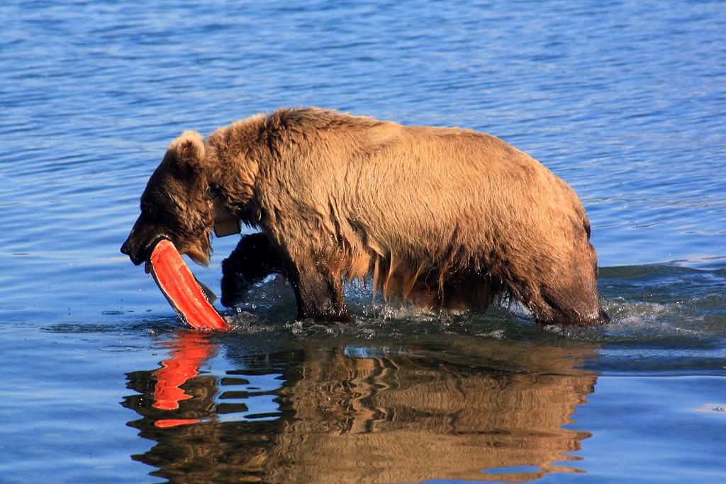 Bear Dinner