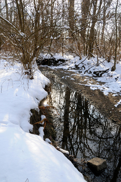 2/06/13<br /> <br /> Small Woodland Stream in Winter