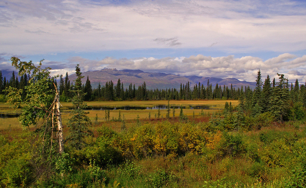 Fall comes early in especially the further north you go. The colors are just starting to change in this shot just south of Hurricane. AK