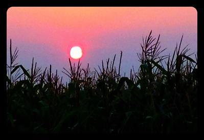 smokey sunset about the corn stalks. Idaho. 8.12