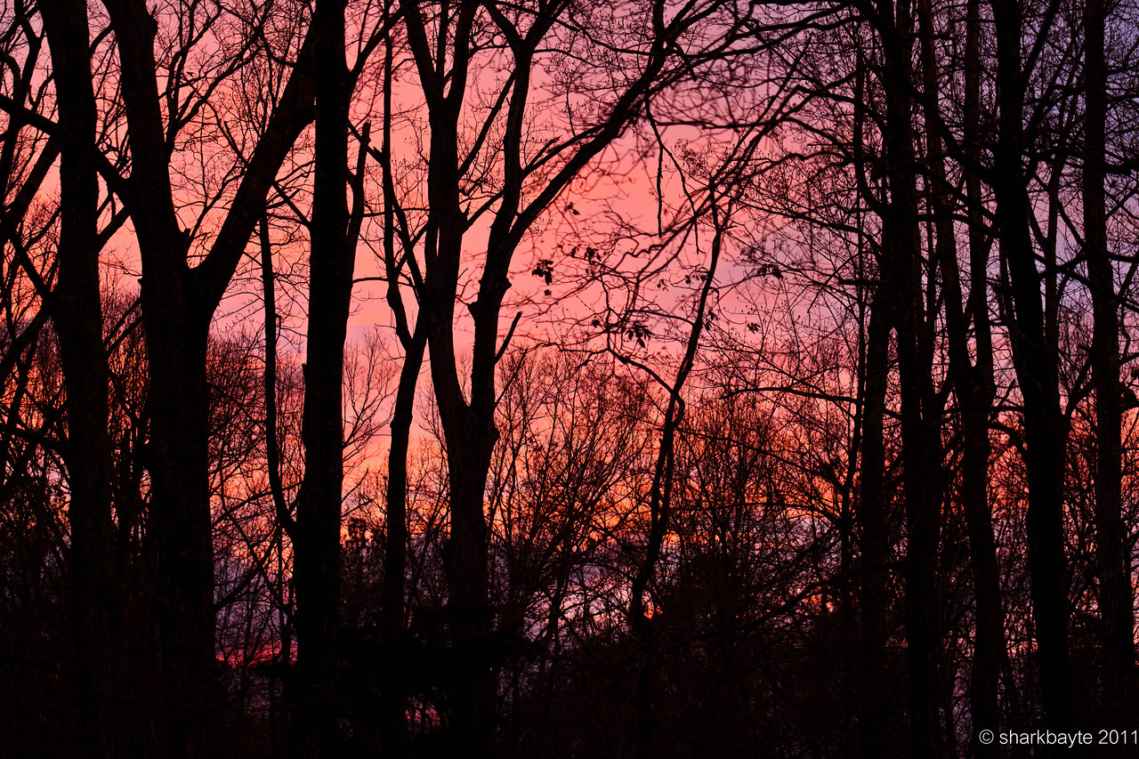March 11, 2011-After the storms cleared out  the sky started to brighten a bit, I grabbed my camera and went outside to capture what I could. This area filled with trees was the only part with the colors. (Day 70 #365Project @sharkbayte)