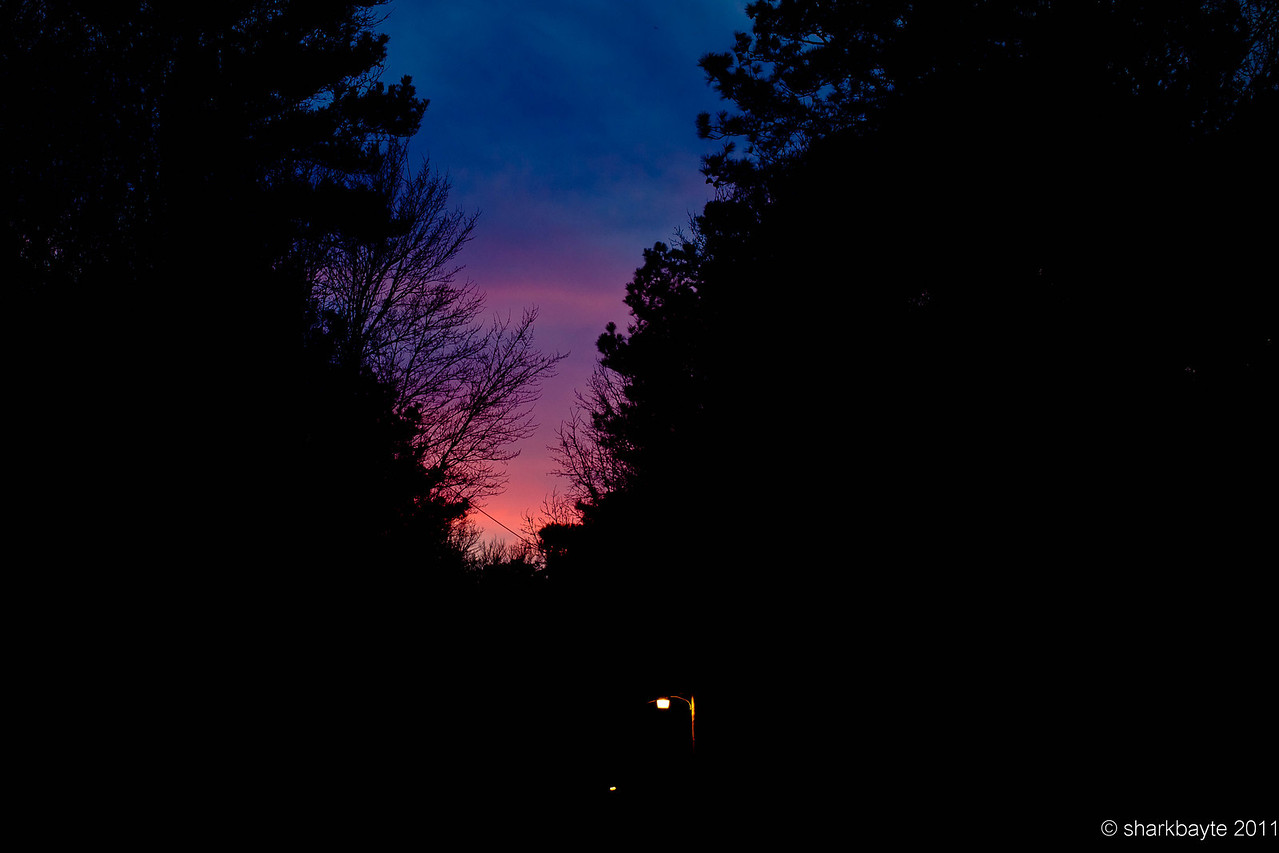 February 22. 2011- The Sunset last night was gorgeous. What I miss about my old place was open sky. This is the widest view of the sky I can find in my area (within one to two miles) that I can safely traverse at night. I left the street lights in to show the height of the trees. Trees everywhere, tops of trees are my horizon these days, but the wildlife more than makes up for it. Day 53 @sharkbayte