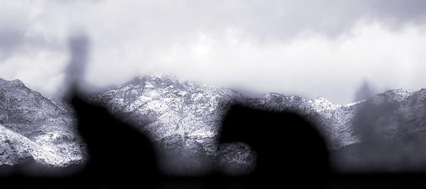 Elephants in the winter snow