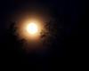 IMG_3132  Moonrise