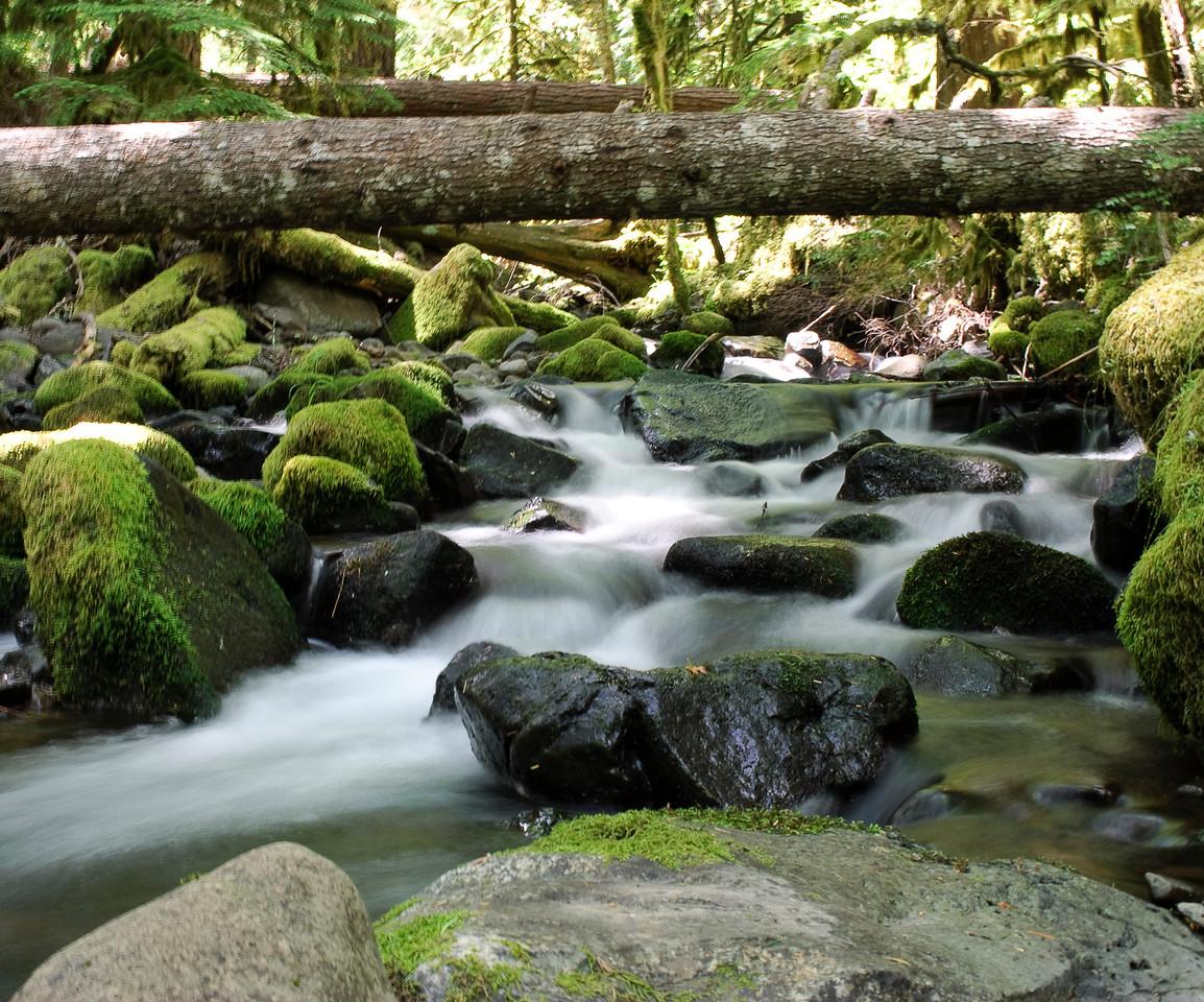 7-04-10  A stream near the Clackamas River.