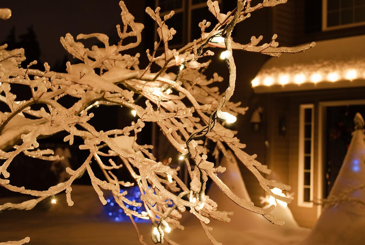 12-22-08 Christmas Lights on an iced-over tree