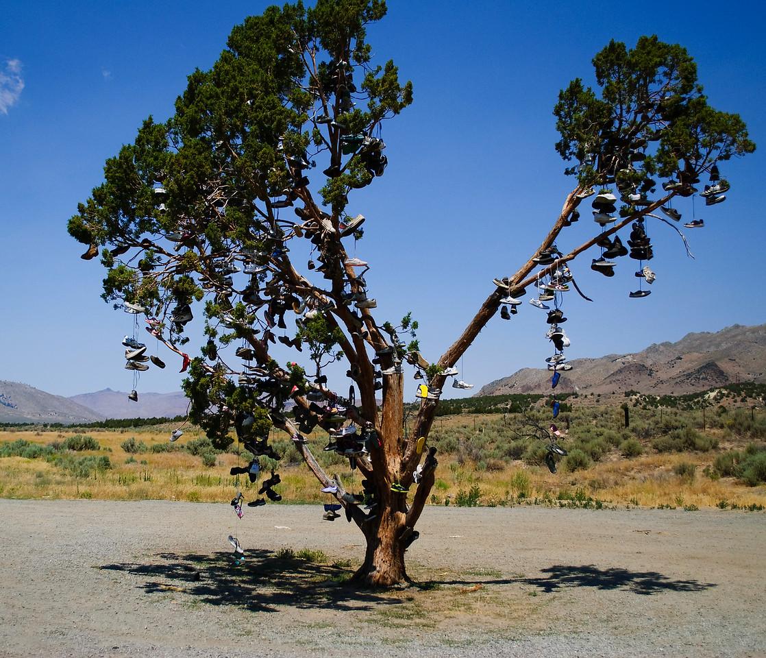 07.19.13  Shoe tree somewhere in NE California