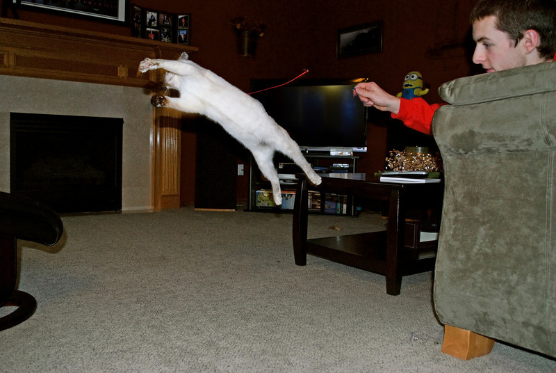 3-15-11  Katy the flying cat  My son was waving a string cat toy around, and Katy, a six-month-old kitten, was catching some serious air trying to get it.  More pictures at http://jrogers.smugmug.com/Family/Katy/16226814_LueLu