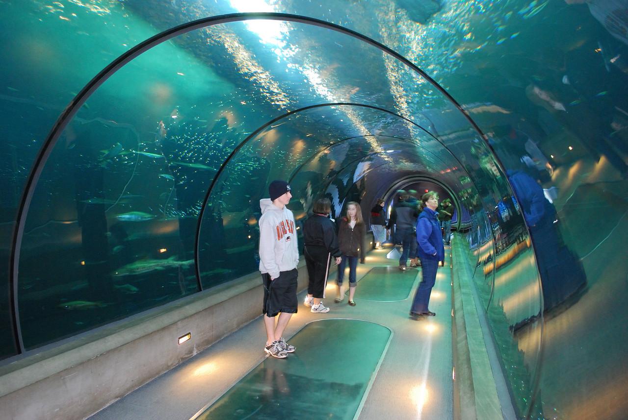 Passages of the Deep exhibit Oregon Coast Aquarium Newport Oregon 1-18-09