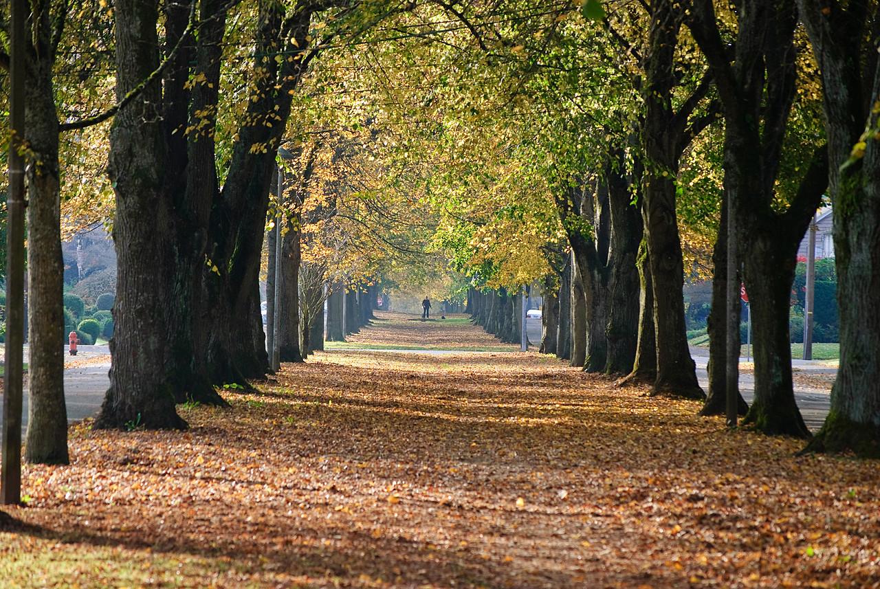 11-05-10  An Autumn walk.