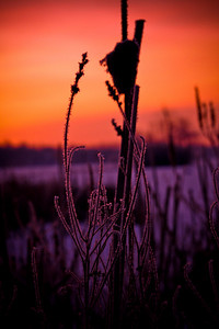 2010-02-04  Catching the frost on the reeds during an orange-red sunrise over Reed's lake. Worth getting up for, don't you think?