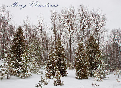 Merry Christmas (12/24/2010) This is from one of the few times that I got to take my camera out during our trip to Northern Michigan (Marquette). It is like a winter wonderland up there.   May your Christmas be Bright and full of laughter! -Bob